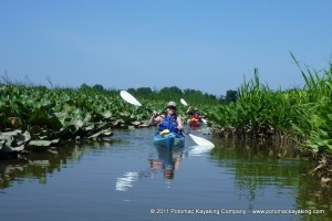 Potomac Kayaking Company Day Trip 300x200 Sea Kayak Lessons
